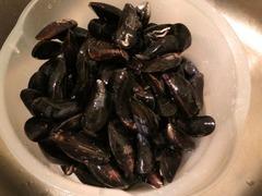 mussel02