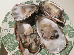 Oyster09