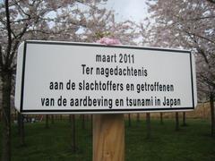 2011Sakura04