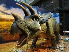 Dinosaurs18