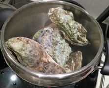 Oyster11