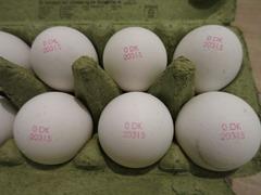 Egg04