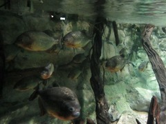 Sealife17
