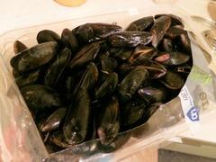mussel01