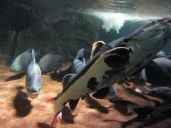 Sealife18