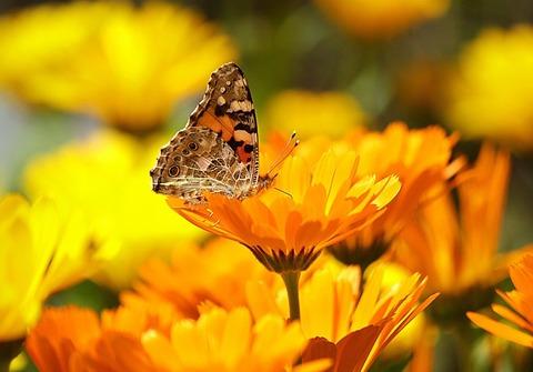 butterfly-196745_1280