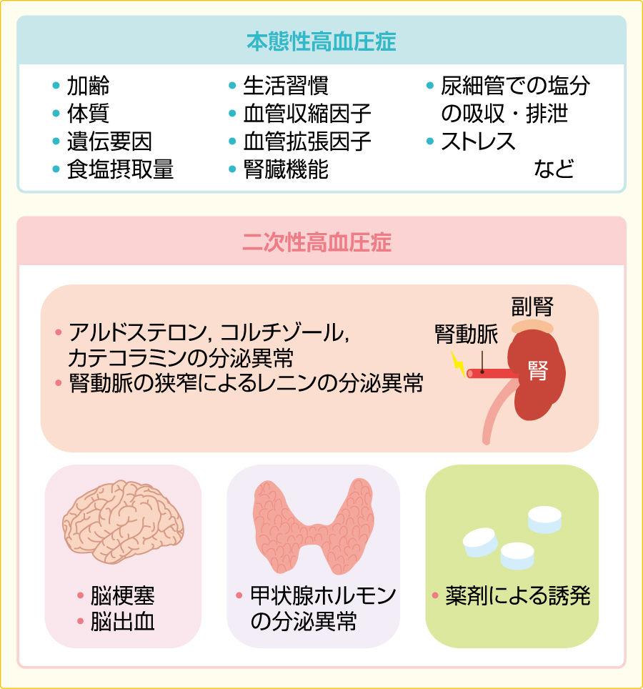 猫の甲状腺機能亢進症、心筋症、慢性腎不全の治療 …