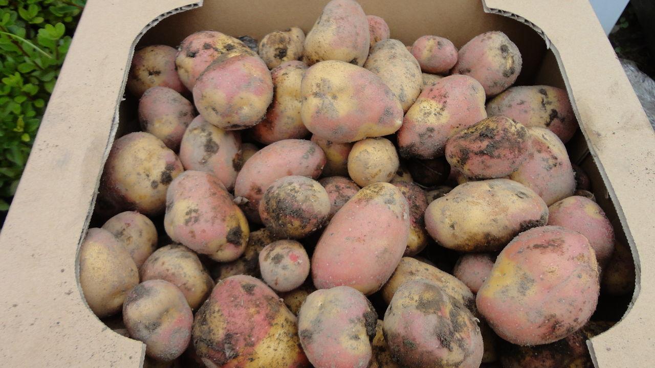 家庭菜園で野菜栽培を実践するブログ