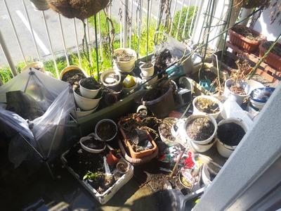 ベランダ菜園西側 2012-09-19 9-41-26