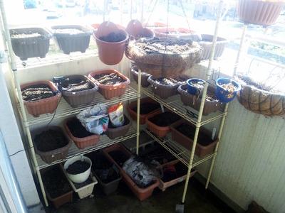 ベランダ菜園棚 2012-09-19 9-40-59