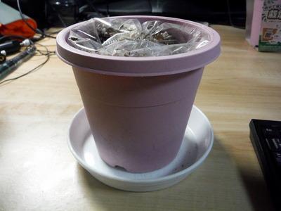ダイソー鉢植え 2013-08-20 17-47-00