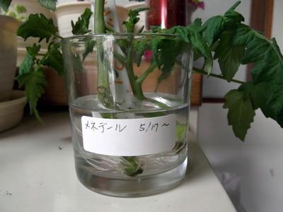 オレンジパルチェ1 2012-05-25 9-15-35