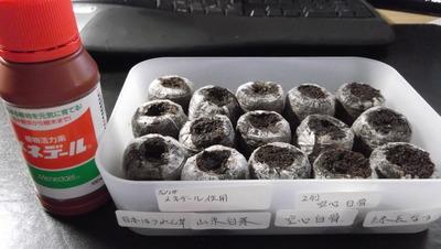 種蒔き2 2012-05-18 10-29-53