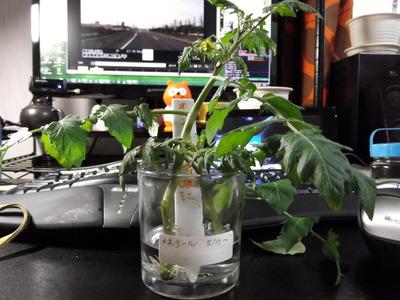 オレンジパルチェ1 2012-05-21 5-33-48