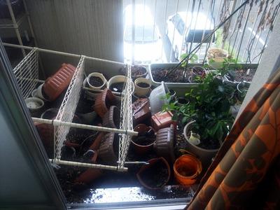 ベランダ菜園 2012-09-17 6-55-53