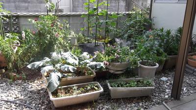 親の庭 2012-05-09 14-54-10