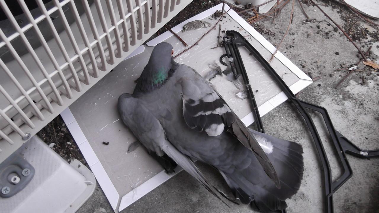 今日保存した最高の画像を転載するスレ 776 [無断転載禁止]©bbspink.comYouTube動画>3本 ->画像>875枚