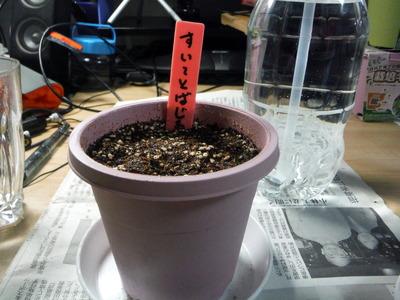 ダイソー鉢植え 2013-08-20 18-04-26
