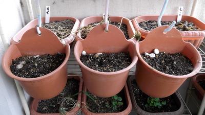 植える前の鉢 2012-06-17 9-27-11