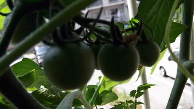 オレンジパルチェ2 2012-05-27 10-34-55