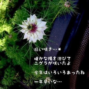 IMG_8136