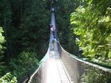 Lynn Canyon つり橋9822