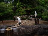 上野動物園のオウム