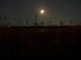 江戸川の月