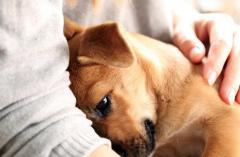 「生活保護」を受けるとペットと暮らせなくなる?