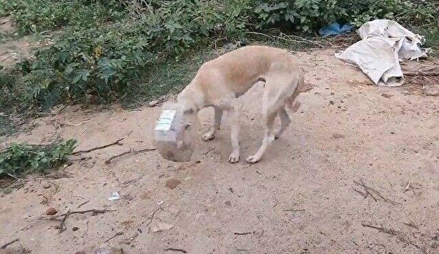 【動画】 イヌの頭にハマっていたプラスチックボトルを取り外す作業w!!