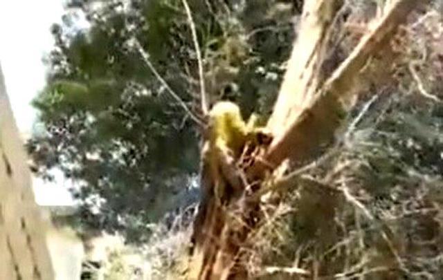 【閲覧注意】 頭へゴチン!!大木を切っていた人に予想外のハプニング!!
