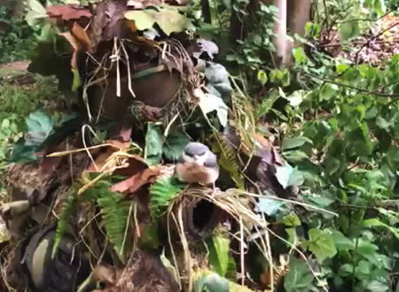 野鳥も普通に騙されるギリースーツのカモフラージュ効果ってこんなにすごい。という短い動画。