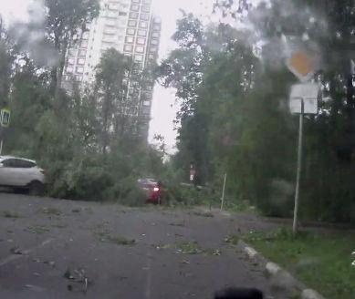 強風で街路樹が倒れ車に直撃