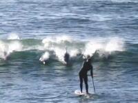 イルカのジャンプに直撃されてしまった男性の映像。見た目より痛いだろこれ。