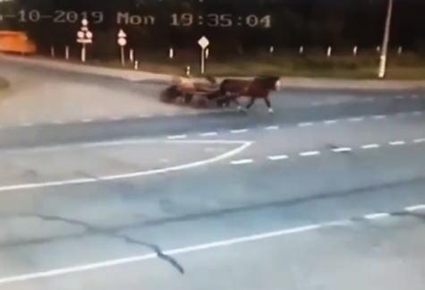 馬車と超速の直進車の事故で馬車の運転手と乗客が亡くなった事故のビデオ。