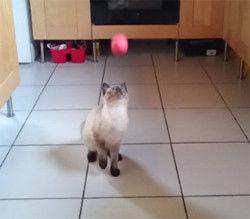 タイミングを見誤ったぜ!猫も肉球の誤り。