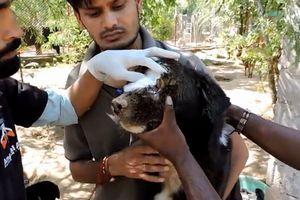 顔が壊死した犬がボランティア団体に保護され驚くべき回復を見せる