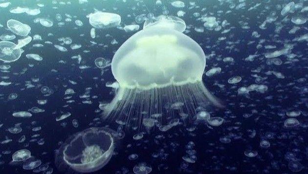 【保存版!】 イギリスBBCが撮影した海の美麗映像を10時間お届け!!