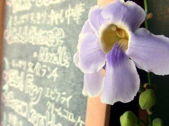 メニューの花飾り