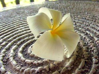 枯山水な花