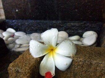 水も滴るお花