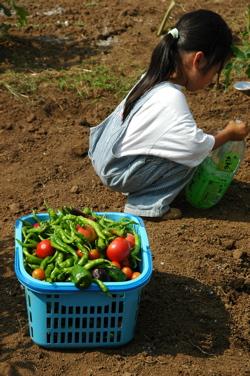 060903収穫