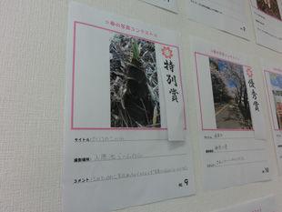 春の写真-(2).jpg