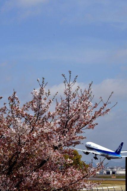 桜ANA2