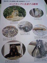 インドネシア動物^^