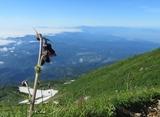 IMG_1719チョウカイアザミ月山