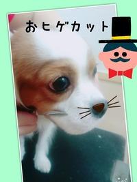 遠藤ココ�