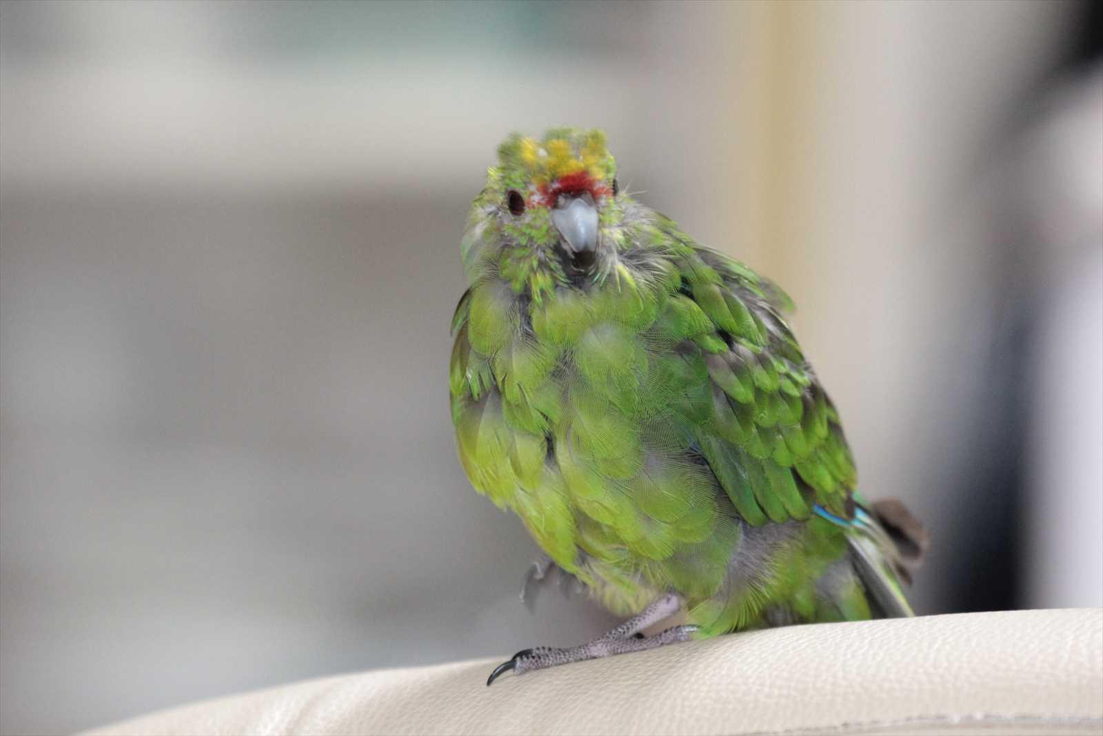 クリニック 仙台 小鳥 の