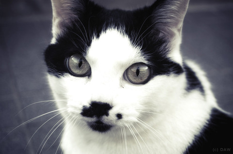 2013_yamagata_cat_002