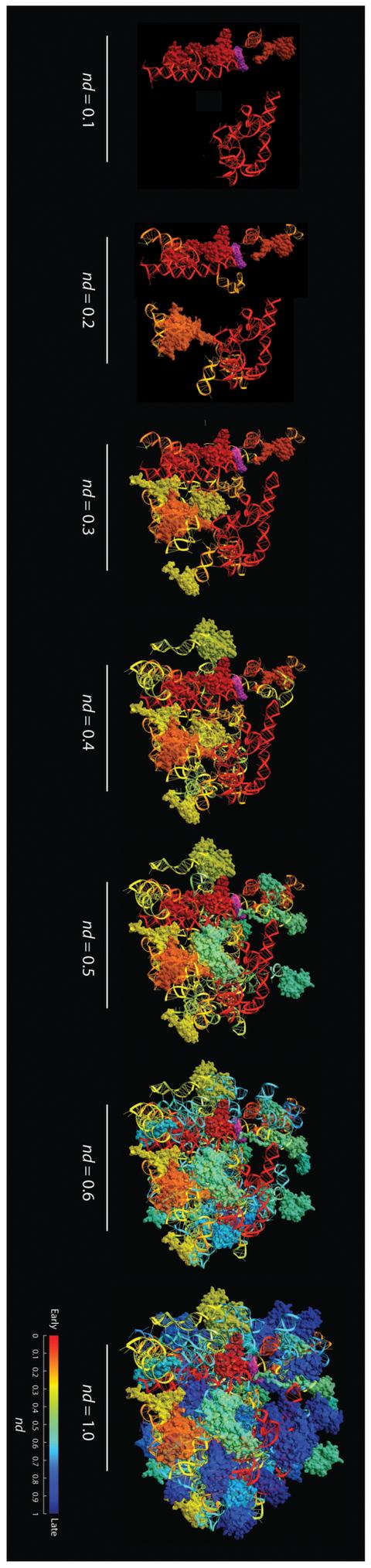 リボゾームの進化